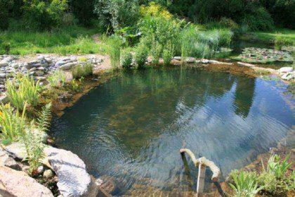 Ol vejetasyonlu rejenerasyon alanı havuzun çevresi boyunca da